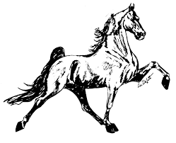 horse head tattoo designs photos pictures and sketches