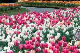 Dallas Arboretum And Botanical Garden Dallas Arboretum Discount Admission Tickets Dallas Citypass