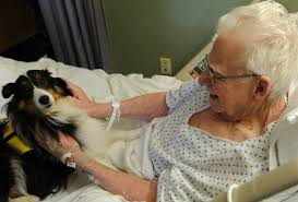 Comfort Dogs Certification Therapy Dogs Companion Animals