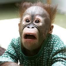 Suprised Meme - funny surprised monkey meme generator