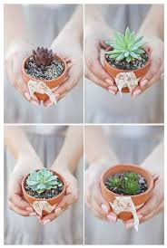 Cute Succulent Pots 108 Best Succulent Wedding Favours Images On Pinterest Plants