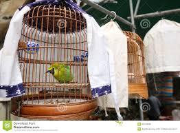 produttori gabbie per uccelli gabbia per uccelli di legno rattan con l uccello verde della