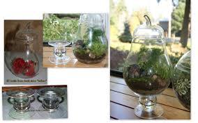 tombazan easy indoor gardening and recycling terrariums