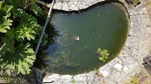 native aquatic plants uk pond cleaning dorsets best pond cleaning service from pond stars uk