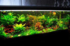 best led light for planted tank led lighting for 140 gallon planted tank the planted tank forum