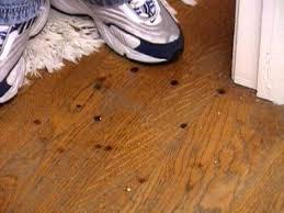 Swiffer For Laminate Wood Floors Swiffer Wood Floor Wb Designs Wood Flooring