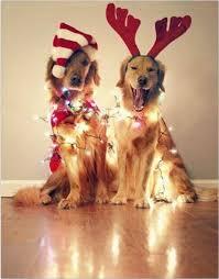 best 25 dog christmas cards ideas on dog christmas