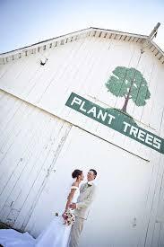 arbor wedding venues 143 best trees weddings images on outdoor weddings