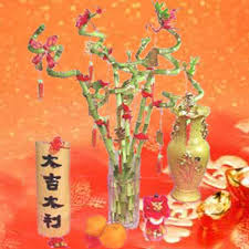 Lunar New Year Decoration Singapore by Singapore Chinese New Year Plant New Year Plants Delivery