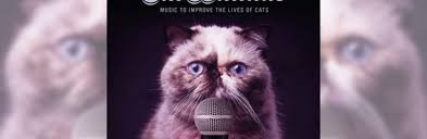 Cat Photo Album Rspca Nsw Have Created An Album U0026 Music Video Especially For Your