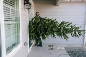how cats kill christmas trees pick my trends