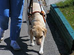 How Does A Guide Dog Help A Blind Person The 10 Biggest Misconceptions About Guide Dogs For The Blind