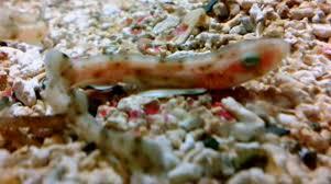 pesci alimentazione all acquario dell argentario l alimentazione dei pesci e la vita