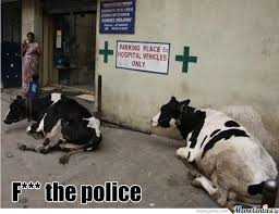 Funny Cow Memes - space cow meme google search funny india pinterest cow meme