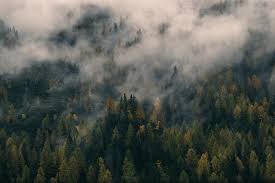 wallpaper tumblr forest awesome beautiful tumblr wallpapers