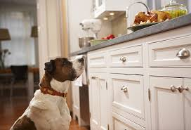 Dogs At Dinner Table People Foods Your Dog Can Eat Pictures