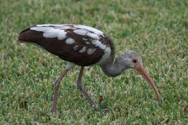 Florida birds images Florida birds jpg