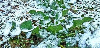 Winter Gardening Ideas Winter Gardening Ideas Tips