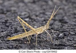 was ist das für ein insekt eine wanze oder was urlaub insekten insekt opastock wanze gehen spanien insekt wanze stockbild