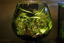 Beta Fish In Vase Starting A Low Maintenance Aquatic Vase Or Bowl Planted Space