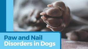 dog nail disorders paw and nail problems in dogs petmd