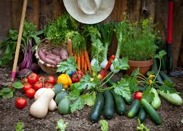 planting vegetable garden gardening ideas