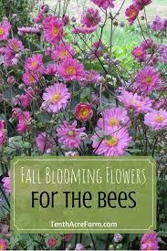 best 25 blooming flowers ideas on pinterest fall garden plants