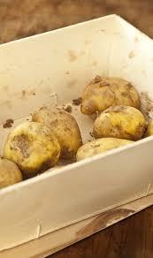 comment cuisiner les pommes de terre de noirmoutier la bonnotte de noirmoutier la pomme de terre qui a la frite