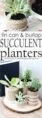 make recycled succulent planters succulent planters recycled