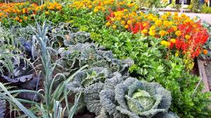 ideas for designing with vegetables toronto gardens