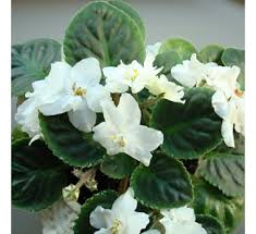 Plants For Office Plants For Office Desk Buy Plants For Office Desk Online At Best