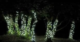 Outdoor Up Lighting For Trees Download Solar Lights For Trees Solidaria Garden