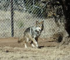 New Mexico wild animals images Outdoors nm visit wildlife west nature park to see wild animals jpg