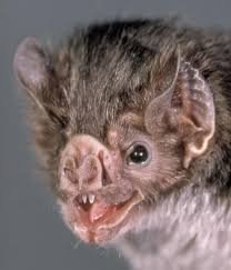 help female vampire bats cope with loss