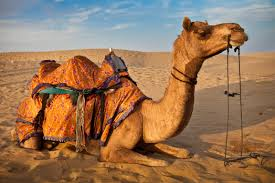 thar desert location royal desert safari best dubai tourism