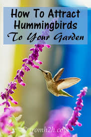 Hummingbird Plant Best 25 Hummingbird Plants Ideas On Pinterest Hummingbird