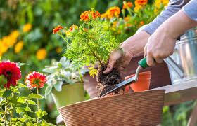 cura giardino cura e manutenzione giardino