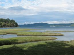 Wetland Resources Of Washington State by Shoalwater Bay Tribe Wikipedia