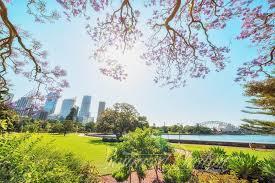 Botanic Garden Sydney Jacaranda In Sydney Botanic Garden Bounced Photon