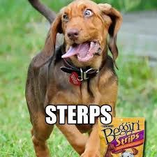 Ermahgerd Animal Memes - 8 ermahgerd animals from memes and funny or die