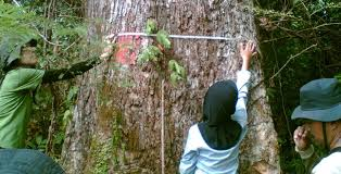 departemen teknologi hasil hutan departemen teknologi hasil hutan