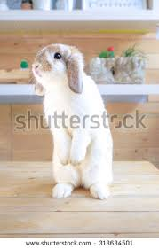 ceramic nature rabbit table l adorable rabbit standing 2 feet on stock photo royalty free