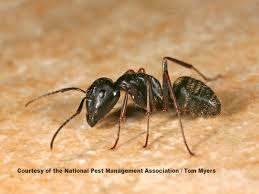 super pest control ants