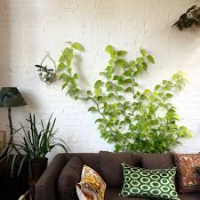 10 secrets to successful houseplants from the experts gardenista