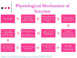 complementary of pink complementary and alternative therapies for erectile dysfunction