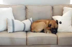 nettoyer pipi de chien sur canapé 10 astuces pour nettoyer les saletés faites par les animaux de