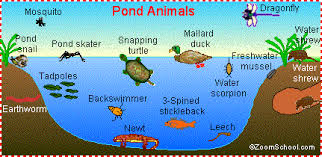 pages to color animals pond life animal pages to color online enchantedlearning com