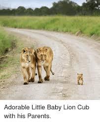 Lion Meme - 25 best memes about baby lions baby lions memes