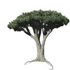 dracaena dracaena field split speedtree