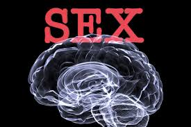 Part Of Brain That Controls Arousal 10 Interesting Facts About Your Brain On Alternet